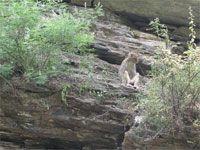 十渡太平猴山之猴